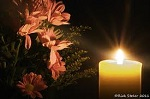 Candle flower